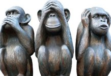 three monkeys image