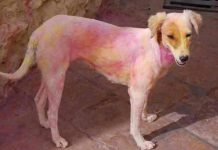 holi dog coloured